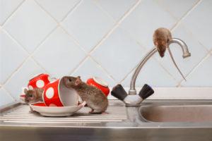 Máte v dome myši? Zbavte sa ich skôr, ako vám znečistia domácnosť!