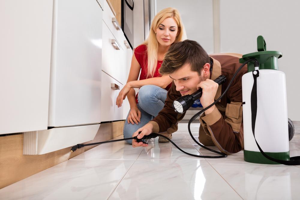 Chráňte svoju domácnosť pred nebezpečnými hmyzom